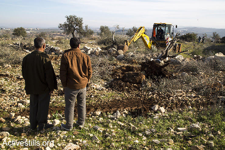 Palestinians watch as Israeli bulldozers uproot their olive trees in order to pave a settler-only road, Izbat Tabib, West Bank, January 16, 2017. (Keren/Manor/