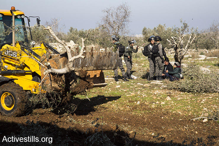 Israeli Border Police stand about as a Palestinian landowner and an Israeli activist sit on an olive tree, refusing to leave as bulldozers uproot dozens of olive trees to build a settler-only bypass road, Izbat Tabib, West Bank, January 16, 2017 (Keren Manor/Activestills.org)