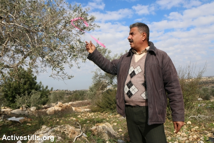 Palestinian activist Mousa Tabib stands beside a marked tree where a new settler bypass road is planned, Nabi Elias, West Bank, December 29, 2016. (Ahmad al-Bazz/Activestills.org)