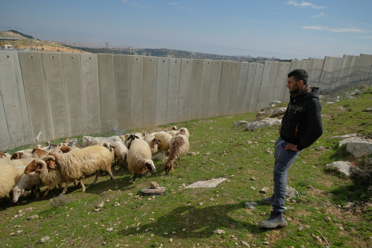 A Palestinian man herds his sheep near the separation wall on the outskirts of Jerusalem, February 17, 2017. (Yaniv Nadav/Flash90)