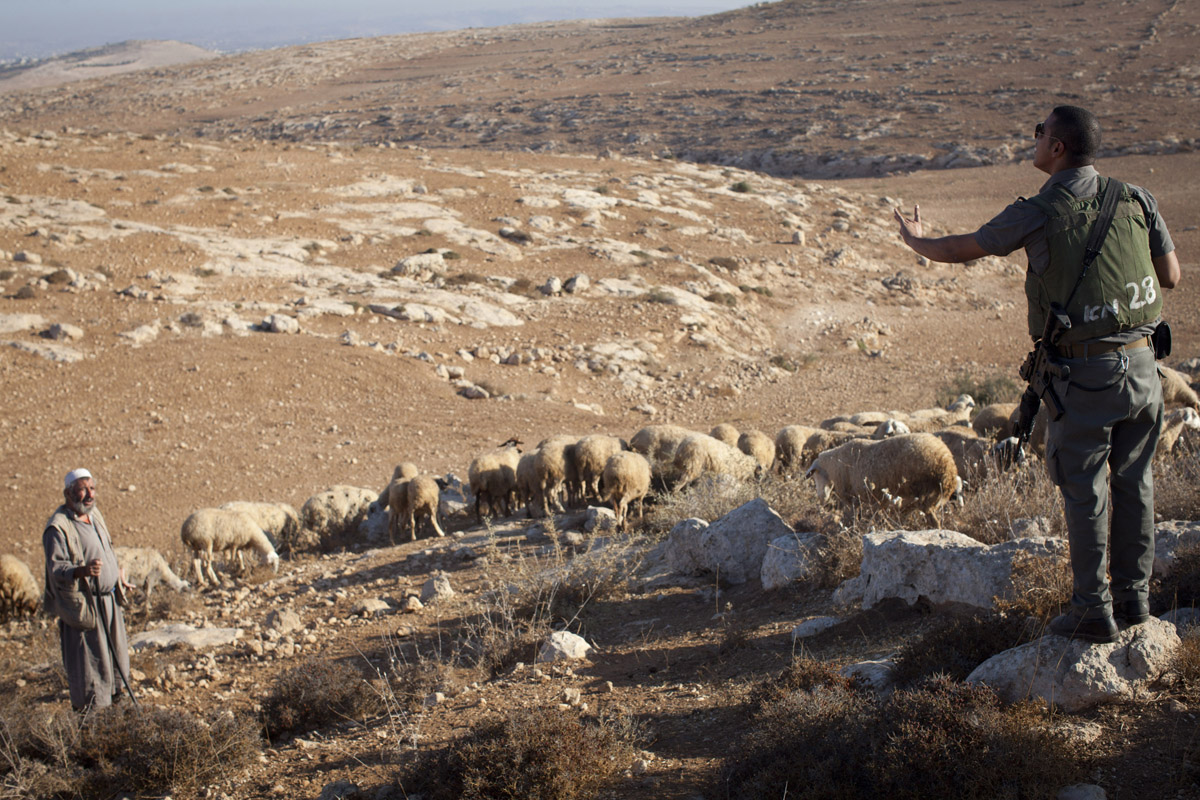 A Palestinian shepherd in the South Hebron Hills tends his flock as an Israeli border policeman orders him to leave the area. (Oren Ziv/Activestills.org)