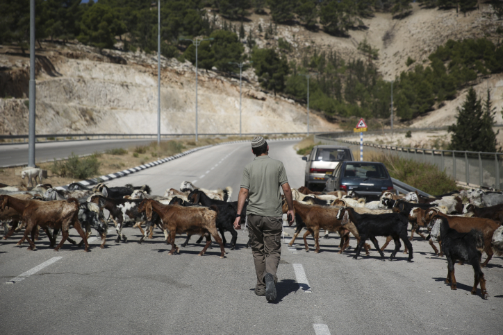 A Jewish right-wing activist seen walking on a road near where a Jewish outpost was established in Area C of the West Bank. (Hadas Parush/Flash90)