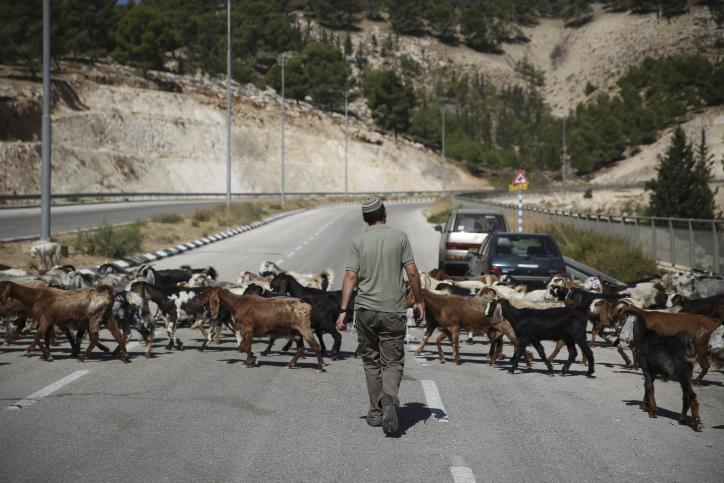 An Israeli settler seen walking on a road near a Jewish outpost east of Jerusalem. (Hadas Parush/Flash90)