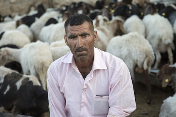 Ismail Jabarin, a shepherd from Al-Butum, a Palestinian community facing expulsion in the South Hebron Hills. (Yael Barnet)