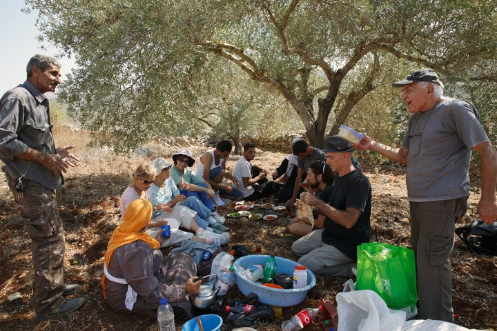 Yaakov Manor (right) at the Palestinian olive harvest. (Vardit Goldener)
