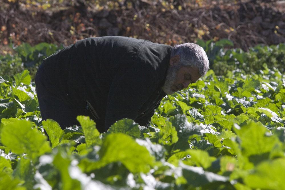 A Palestinian farmer tending to his organic farm in Wadi Fuqin, West Bank, December 10, 2008. (Oren Ziv/Activestills.org)