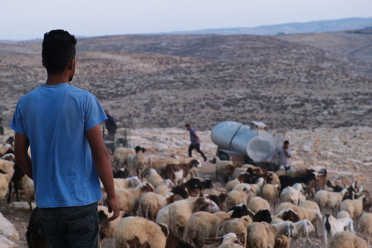 Hamza, Inshirah's younger brother, herding his father's goats in the West Bank village of A-Tuba. (Rachel Shor)