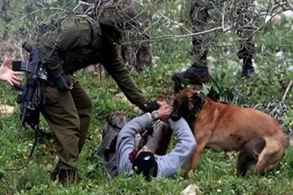 Border Police released an attack dog on unarmed Palestinian demonstrators (photo: PSCC)