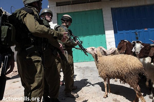 File photo of Israeli soldiers confronting Palestinian-owned sheep. (Photo: Activestills.org)