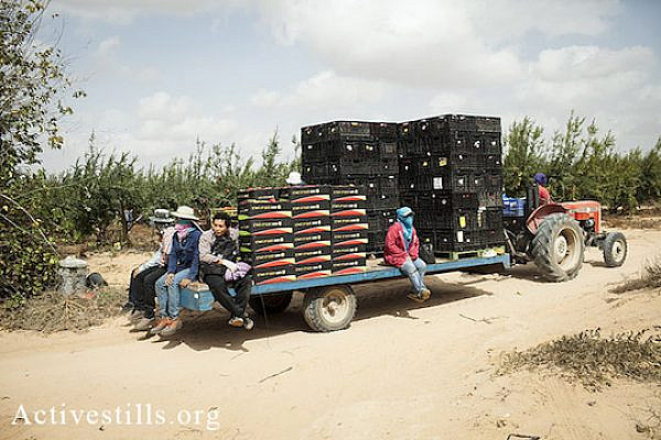 Thai workers on a tractor on the way to start their working day, early hours of October 18, 2013. (Shiraz Grinbaum/Activestills.org)