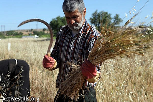 Illustrative photo of a Palestinian farmer working his land (Photo: Anne Paq/Activestills.org)