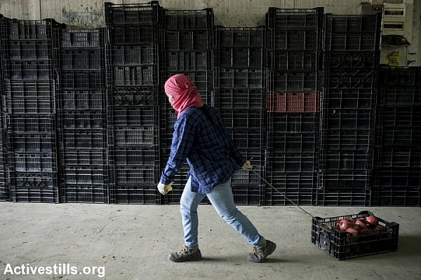 Thai workers sorting crates of pomegranates, Sde Nitzan, October 18, 2013. (photo: Shiraz Grinbaum/Activestills.org)