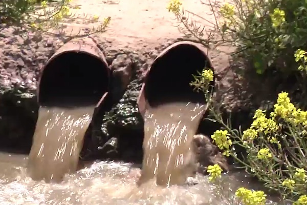 Untreated sewage flows in the West Bank (Social TV)