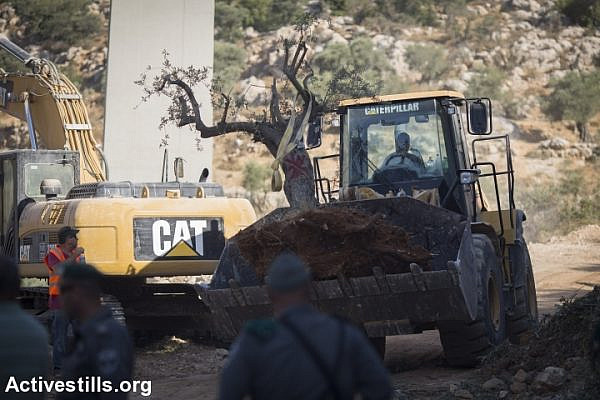 An Israeli bulldozer carries uprooted olive trees to make way for Israel's separation wall, in the West Bank town of Beit Jala near the Jewish settlement of Gilo and adjacent to the biblical Palestinian town of Bethlehem, August 20, 2015. (photo: Oren Ziv/Activestills.org)
