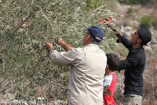 A Palestinian man and child pick olives during the olive harvest season in the West Bank village of Deir Istiya, near Salfit, November 2, 2012. (photo: Ahmad Al-Bazz)