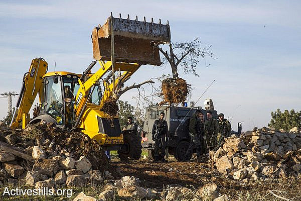 Israeli authorities uproot olive trees in order to pave a settler bypass road, Izbat Tabib, West Bank, January 16, 2017. (Keren Manor/Activestills.org)