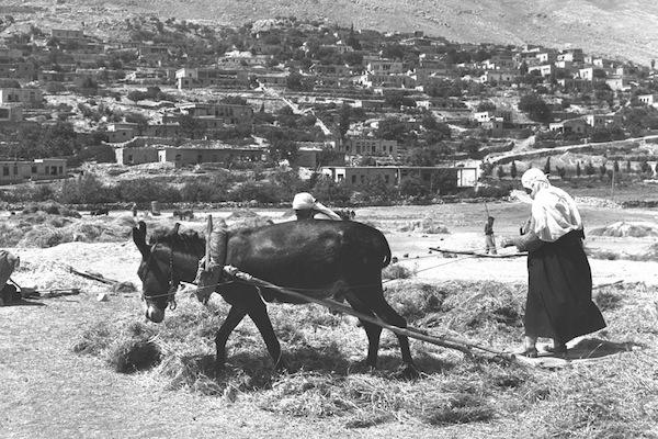 Druze villagers threshing corn in Majdak Shams, Golan Heights, 1967. (Moshe Milner/GPO)