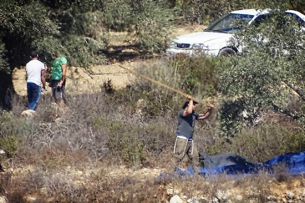 Israelis harvest olive trees belonging to Palestinian famers from the village of Al-Janiya, adjacent to the settler outpost of Zait Ra'anan, West Bank. (Yesh Din)