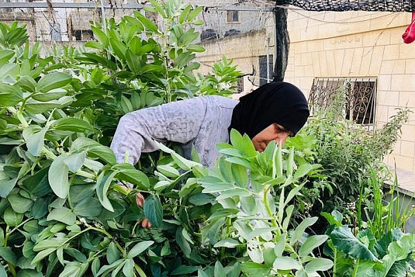 """""""There's nothing like waking up in the morning, picking tomatoes, cucumbers, and zucchini, and preparing breakfast."""" (Courtesy of Lajee Center)"""