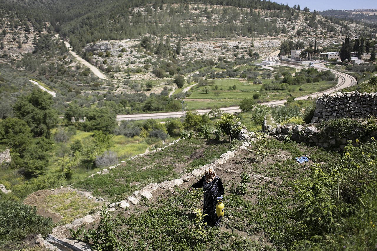 Sixty-year-old Mariam Bader seen watering her crop on the ancient terraces of the Palestinian village of Battir, overlooking the Israel Railway tracks crossing the village farm land, West Bank, April 7, 2014. (Hadas Parush/Flash90)