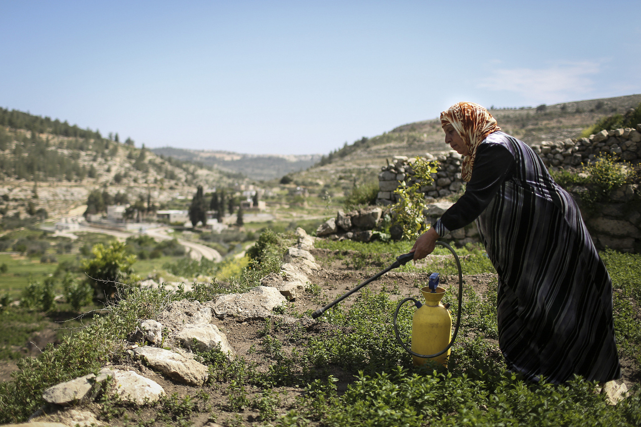 Mariam Bader seen watering her crop on the ancient terraces of the Palestinian village of Battir, overlooking the Israel Railway tracks crossing the village farm land, April 7, 2014. (Hadas Parush/Flash 90)