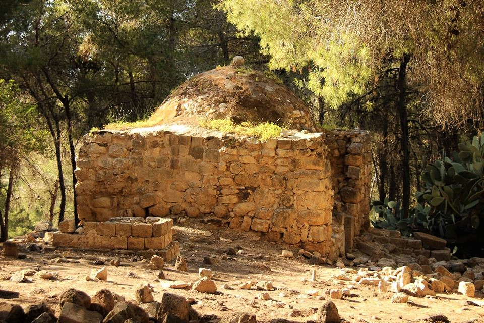 A JNF forest built on the remains of the depopulated Palestinian village of Lubya. (Courtesy of Umayma Diab)