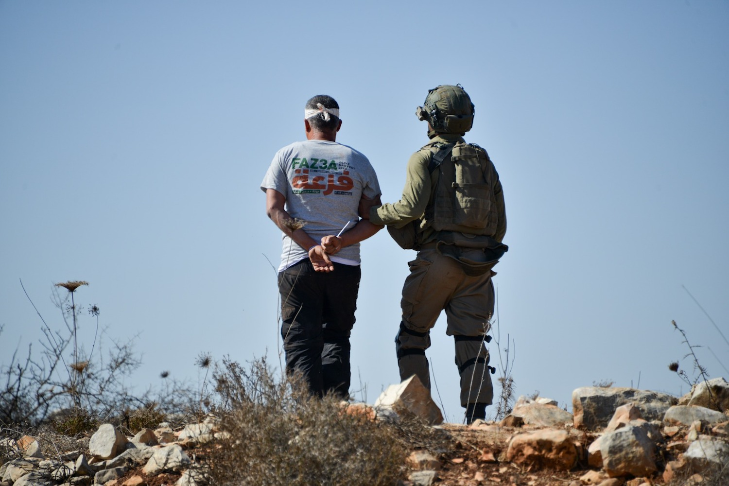 Israeli soldiers arrest a blindfolded Mohammad Khatib during the olive harvest near a settlement outpost established on Palestinian land in the Salfit area of the West Bank, October 11, 2021. (Matan Golan)